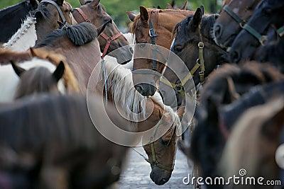 Biggest horse trade fair of Western Europe