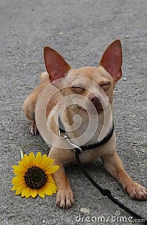 Biggilo smiling