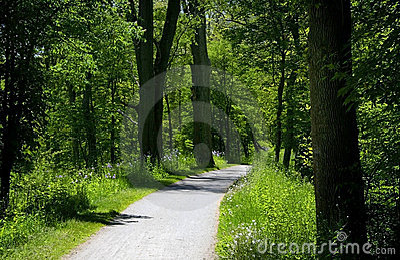 Bike Trail Through Forest