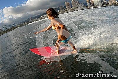 Bikini surfer girl surfing