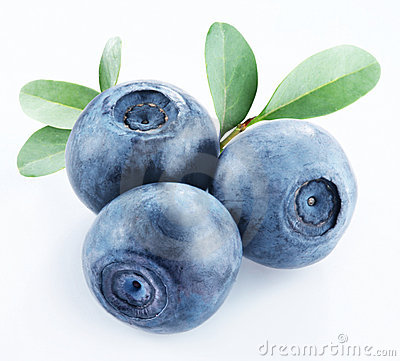 Free Bilberries Stock Photography - 8812852