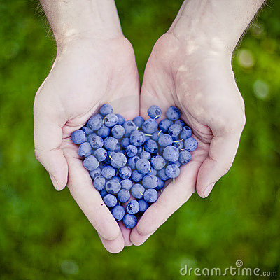Bilberry heart in hand