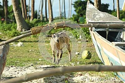 Billy Goat beside fishing boat