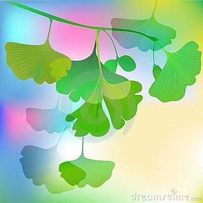Biloba summer tree close up illustration