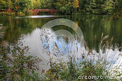Biltmore bass pond stock photo image 60076980 for Bass pond design