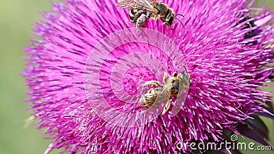 bin blommar två