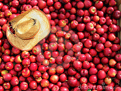 Bin full of red apples.