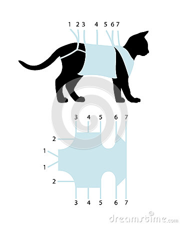 Binding of postoperative bandage on cat Vector Illustration