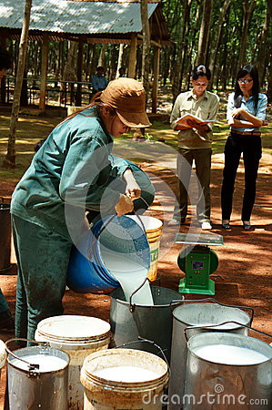 Worker weigh latex rubber at rubber plantation Editorial Stock Photo