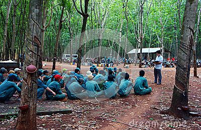 Worker meeting at rubber plantation Editorial Stock Photo