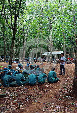 Worker meeting at rubber plantation Editorial Stock Image