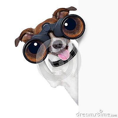 Free Binoculars Dog Stock Image - 32850881