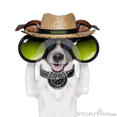 Binoculars safari compass dog watching