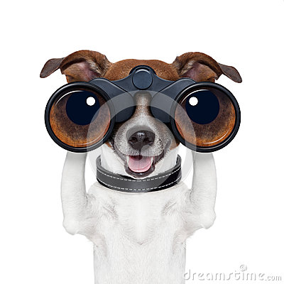 Free Binoculars Searching Looking Observing Dog Royalty Free Stock Photo - 26906535