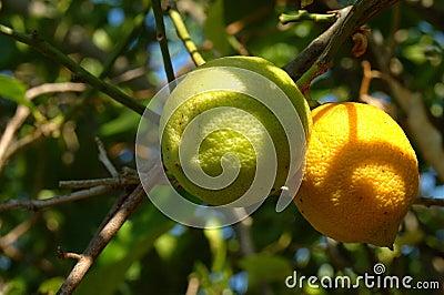 Biological lemons