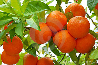 Biological oranges