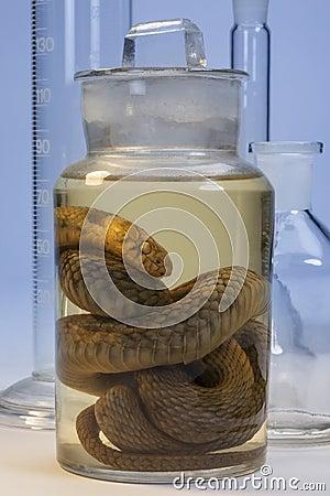 Biological Specimen - Snake