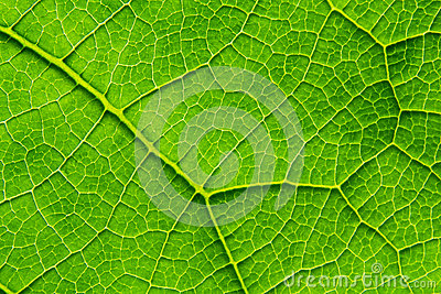 Biological texture of the leaf