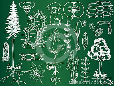 Biology plant sketches on school board