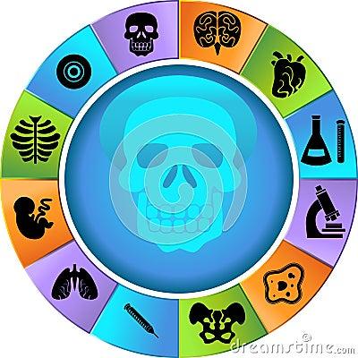 Biology Wheel