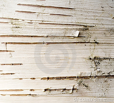 Free Birch Bark Abstract Stock Image - 2012411