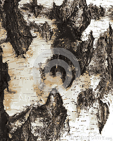 Birch bark texture pattern