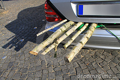 Birch fire wood in a motor vehicle luggage carrier