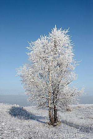 Birch, hoarfrost and space