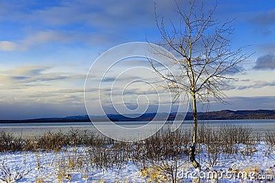 Birch - Lake Superior