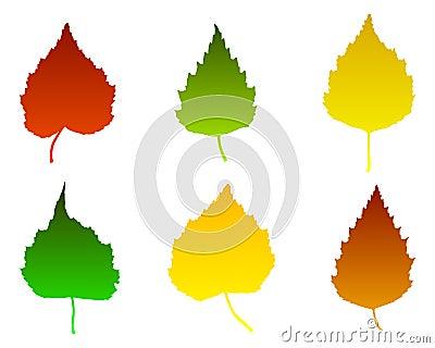 Birch leaves