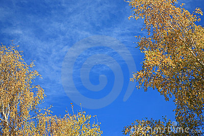 Birch leaves frame