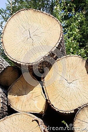 Birch Logs Close Up