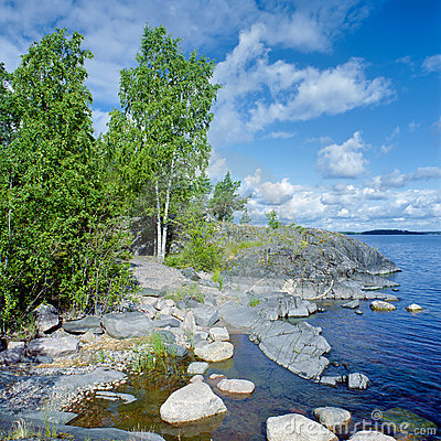 Free Birch On The Stony Shore Of Ladoga Lake Stock Image - 24267311