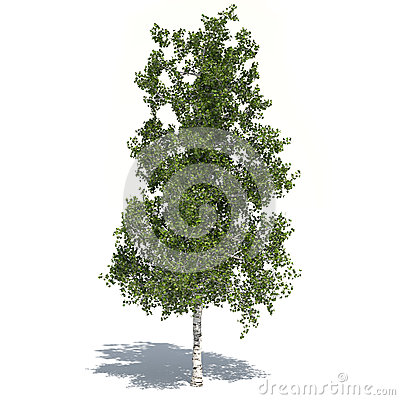 Birch tree 3d illustrated