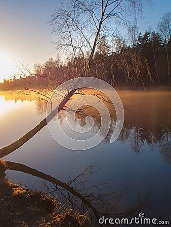 Birch tree by a misty lake