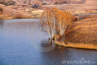 Birch Trees At Waterside In Autumn Royalty Free Stock Images - Image: 21498489