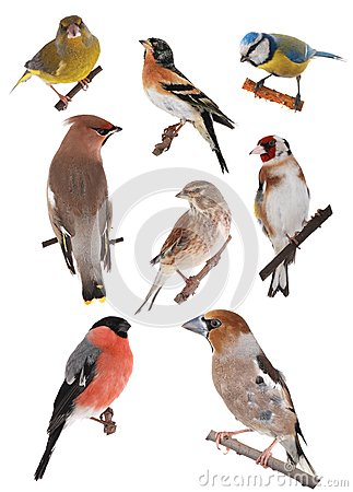 Free Bird Stock Image - 30557291