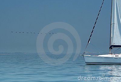 Bird above silent water and white yacht.