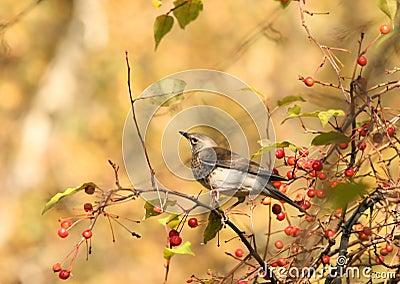 Bird in autumn park