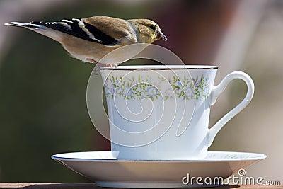 Bird Balancing Act