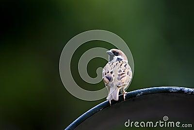 Bird on a bin