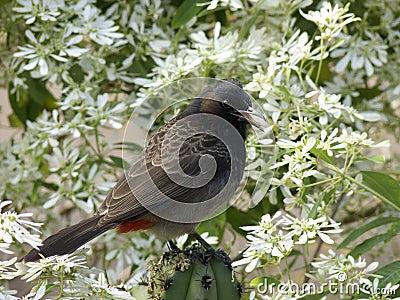 Bird blossoms