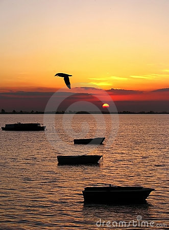Bird and boats at sunset