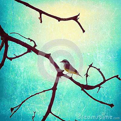 Bird in a branch