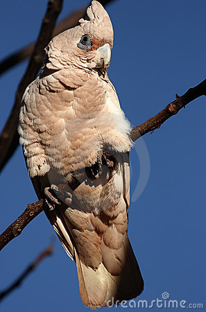 Bird on branch in Australia