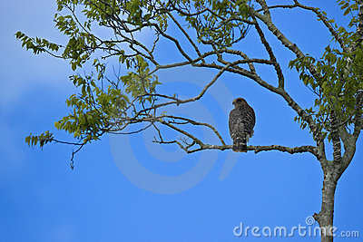 Bird on a Branch in the Florida Everglades