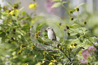 Bird on bush branch