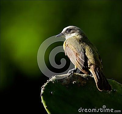 Bird on a cactus leaf.