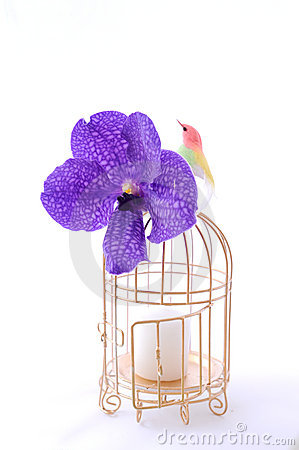 Bird with cage and flower