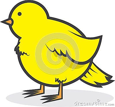 Bird Canary Chubby